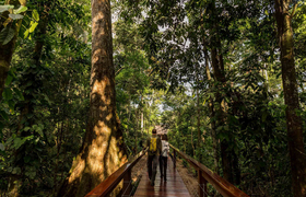 Boardwalk im Tambopata Research Center, Peru